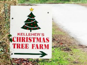 sign giving directions to Kildare Christmas Trees farm