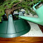 christmas tree care water