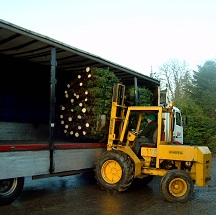 Loading Christmas trees