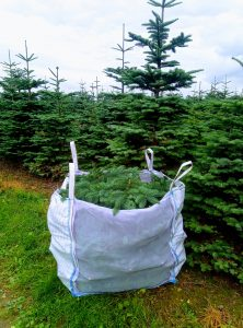 Sack of noble fir foliage